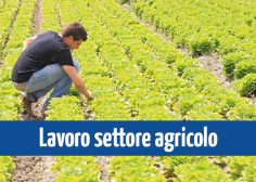 https://www.fmtslavoro.it/wp-content/uploads/2020/03/News-Sito_Lavoro-settore-agricolo-236x168.jpg