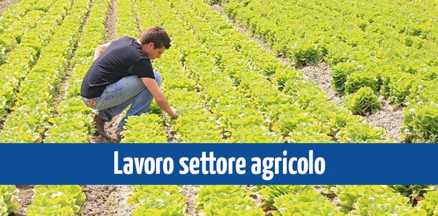 News-Sito_Lavoro-settore-agricolo