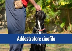 https://www.fmtslavoro.it/wp-content/uploads/2020/03/News-Sito_addestratore-236x168.jpg