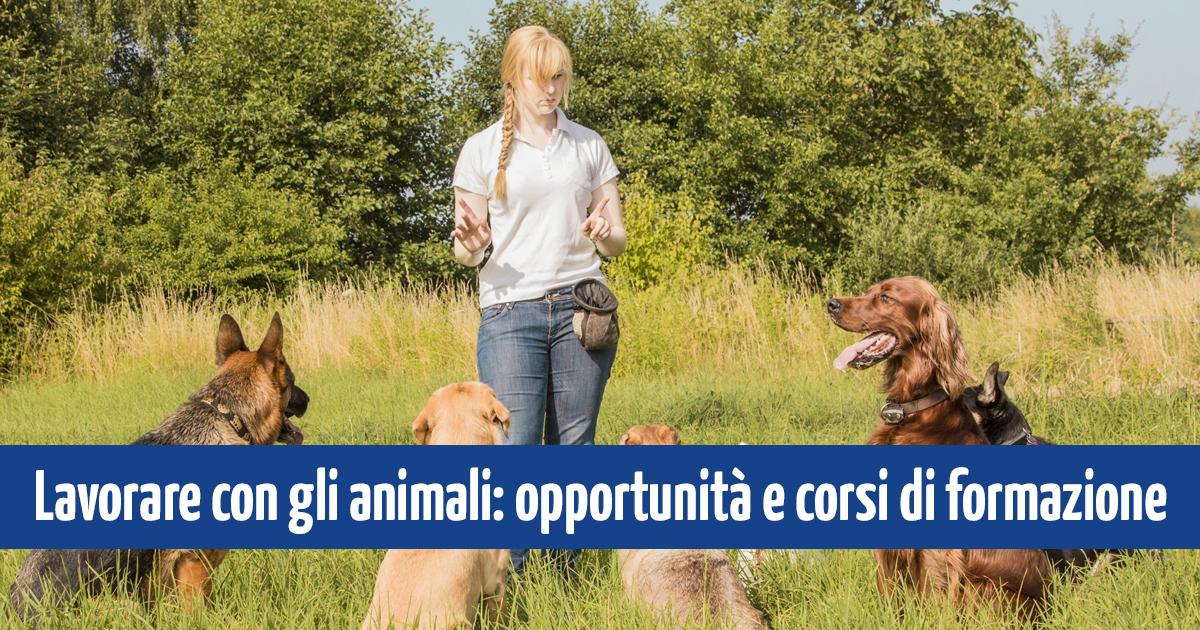 og_lavorare_animali